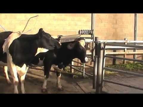 Autotuned Cows